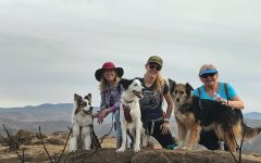 From Training Dogs to Teaching Students