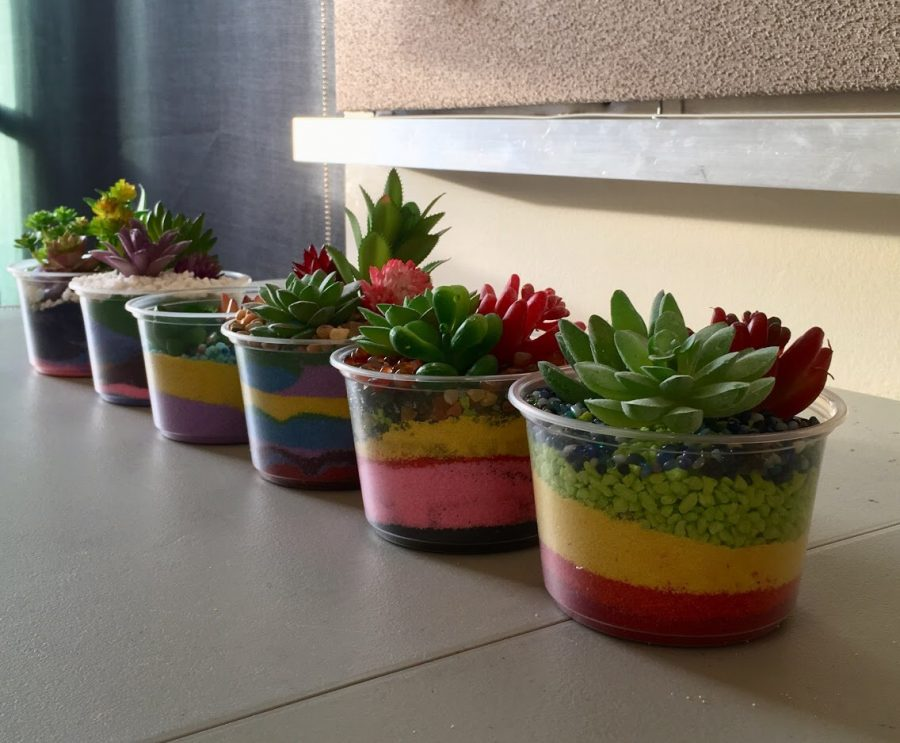 How to Make Sand Succulent Bowls